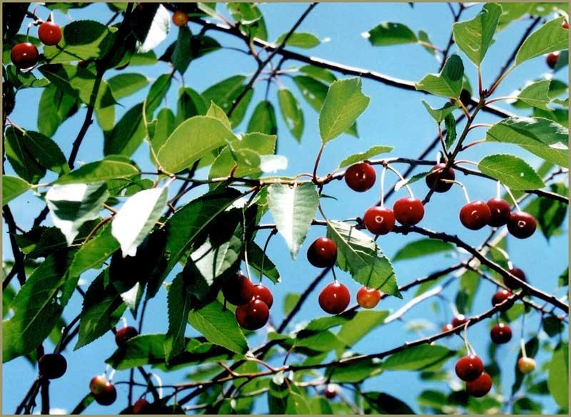 "фото ""Summer Forever"" метки: пейзаж, природа, лето, цветы"