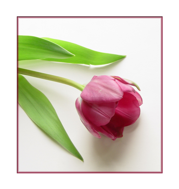 """фото """"Simple Beauty"""" метки: натюрморт,"""
