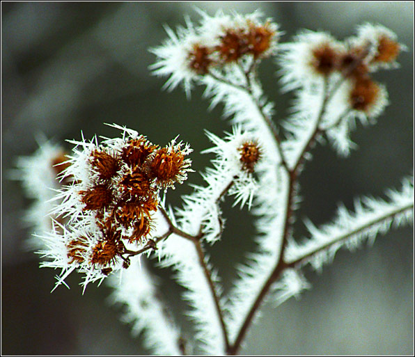 """фото """"Winter Etude #3"""" метки: пейзаж, природа, зима, цветы"""