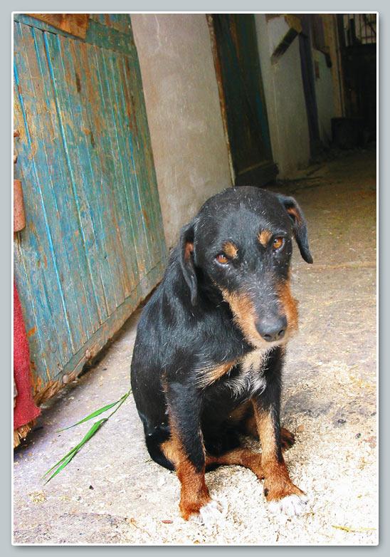 """фото """"Очень грустная собака"""" метки: природа, домашние животные"""