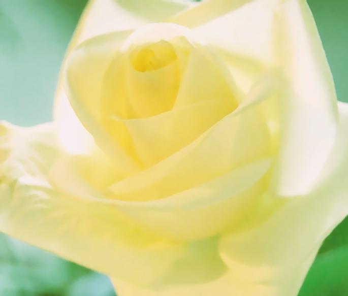 """фото """"жёлтая нежность"""" метки: макро и крупный план, природа, цветы"""