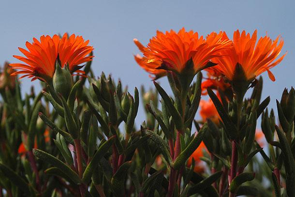 """фото """"*Female chorus*"""" метки: макро и крупный план, природа, цветы"""
