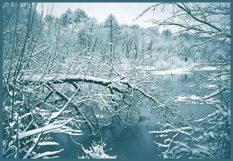 """фото """"Привлекательность зимнего хаоса"""" метки: пейзаж, зима"""