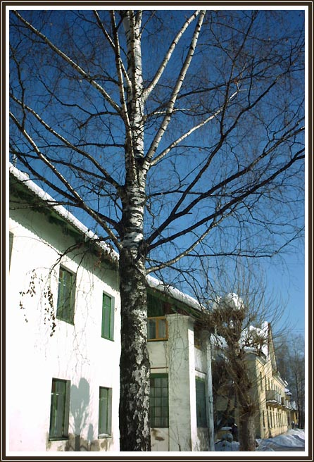 "фото ""the spring birch"" метки: архитектура, пейзаж, весна"