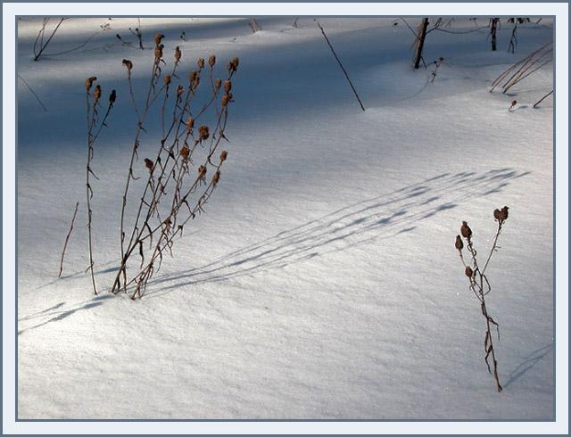 "фото ""ТЕНИ"" метки: природа, цветы"