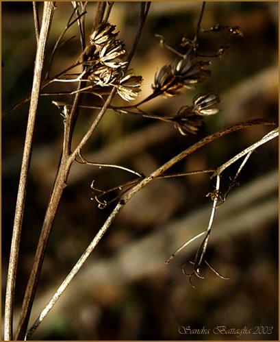 """фото """"Rush"""" метки: природа, разное, цветы"""