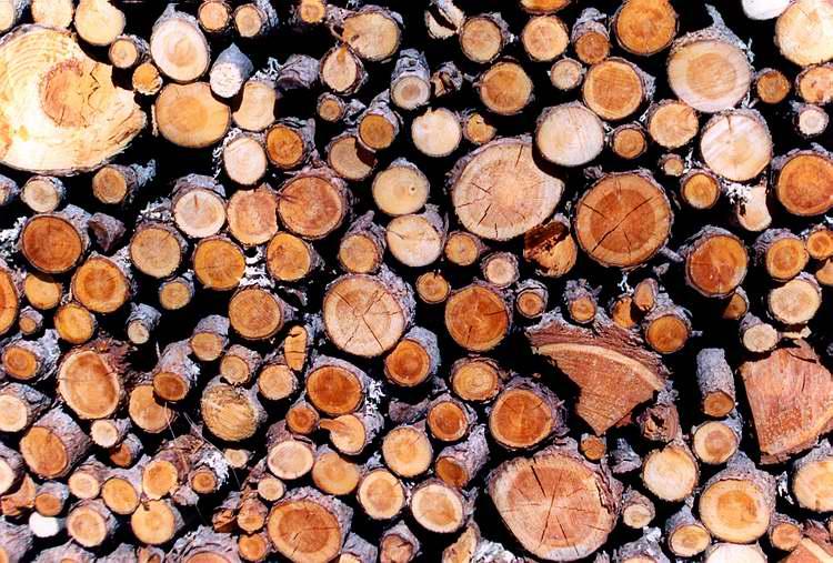 "фото ""wood"" метки: природа, разное,"