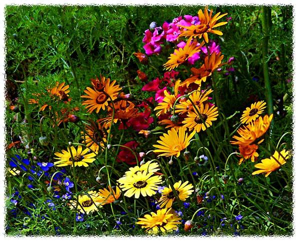 """фото """"Flors"""" метки: разное,"""