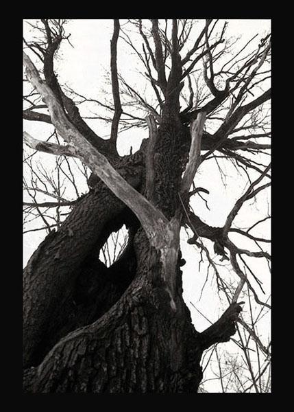 """фото """"Black-and-white Tango"""" метки: природа,"""