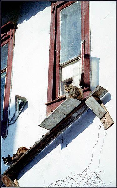 """фото """"Кошкин дом -2"""" метки: природа, архитектура, пейзаж, домашние животные"""