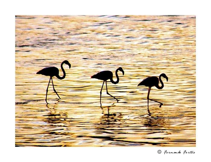 """фото """"Wave Dancing"""" метки: природа, дикие животные"""