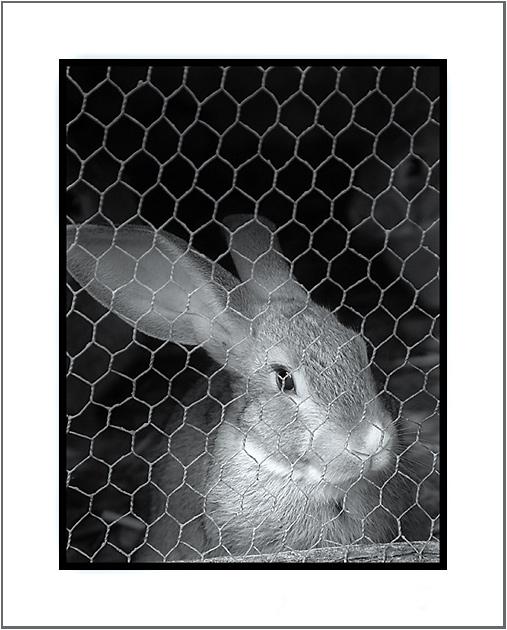 "фото ""Prisoner"" метки: природа, дикие животные"