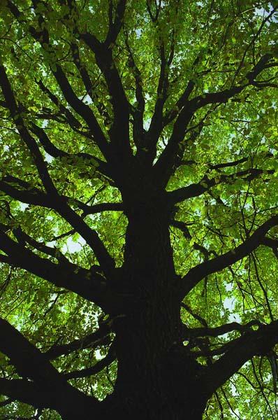 "фото ""Emerald"" метки: природа,"