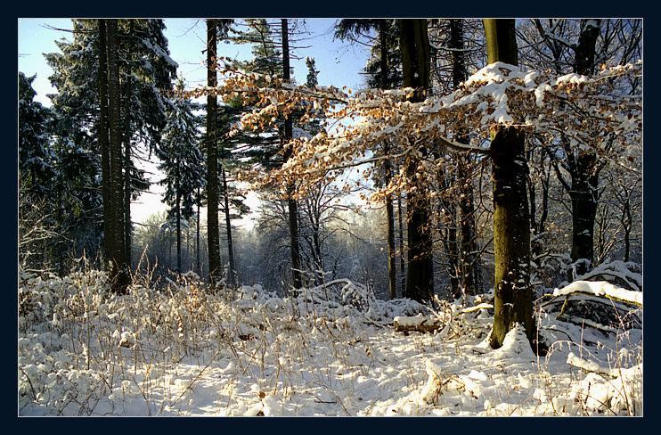 """фото """"Зимний полдень"""" метки: природа,"""