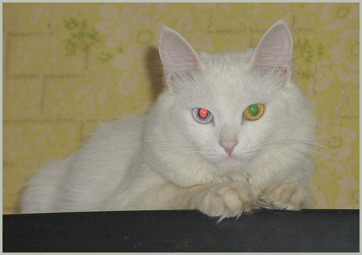 """фото """"Кошачья палитра"""" метки: природа, домашние животные"""