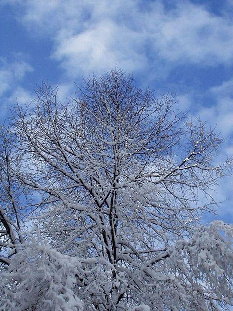 """фото """"зимнее небо"""" метки: пейзаж, зима, облака"""