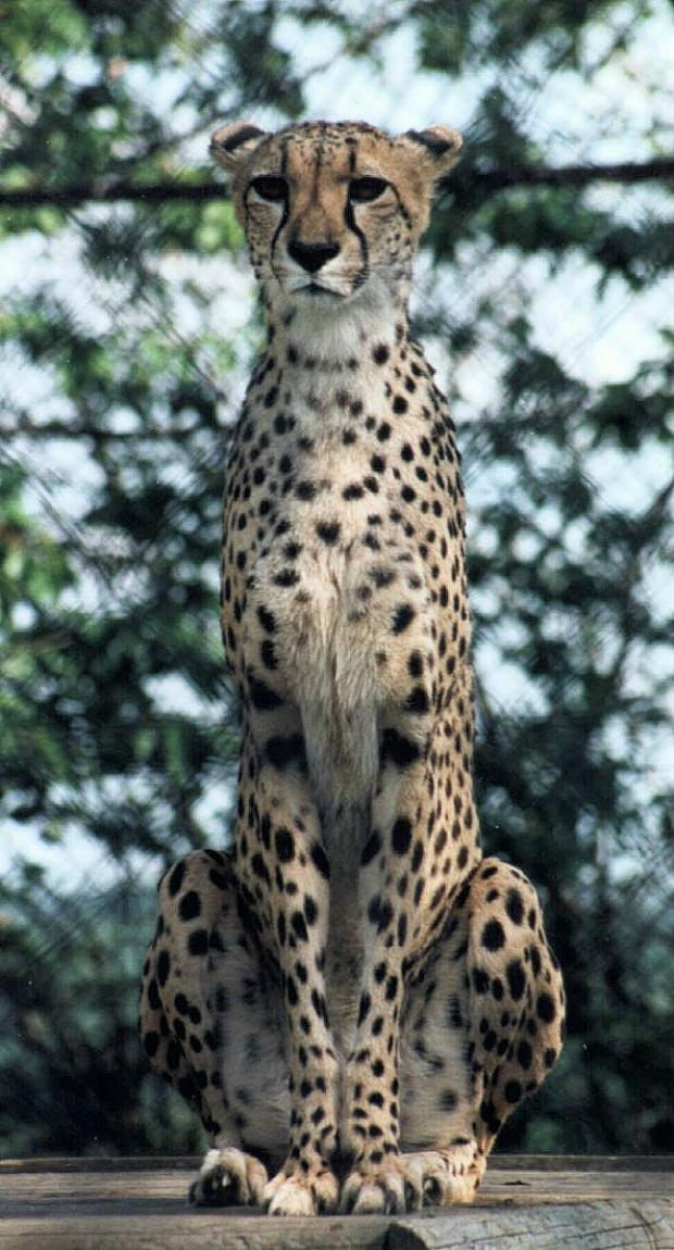"фото ""Sentry Duty"" метки: природа, дикие животные"
