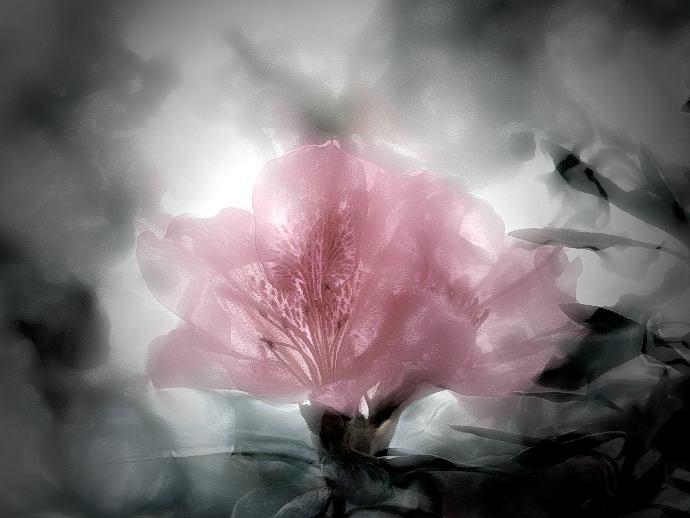 "фото ""Life Within"" метки: природа, фотомонтаж, цветы"
