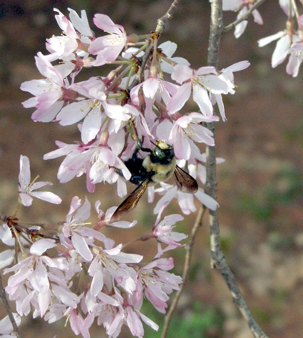 """фото """"Pretty Eyes"""" метки: природа, макро и крупный план, насекомое"""