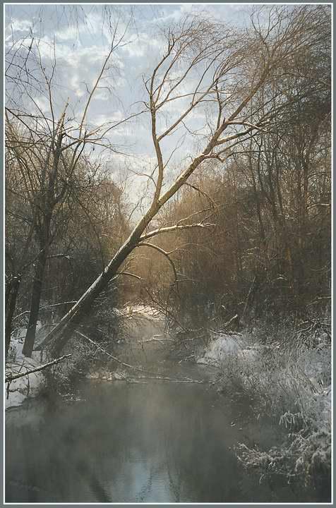 """фото """"Конец февраля"""" метки: пейзаж, зима, лес"""