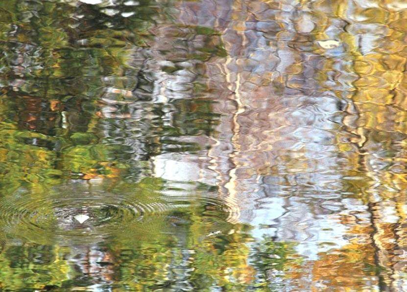"фото ""Листик по-импрессионистически."" метки: пейзаж, жанр, вода"