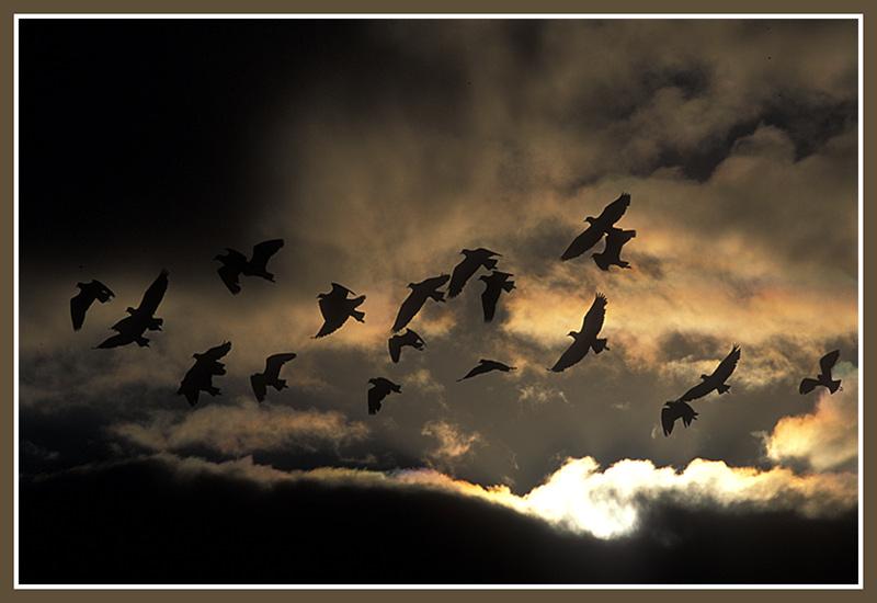 """фото """"Birdflight"""" метки: природа, дикие животные"""