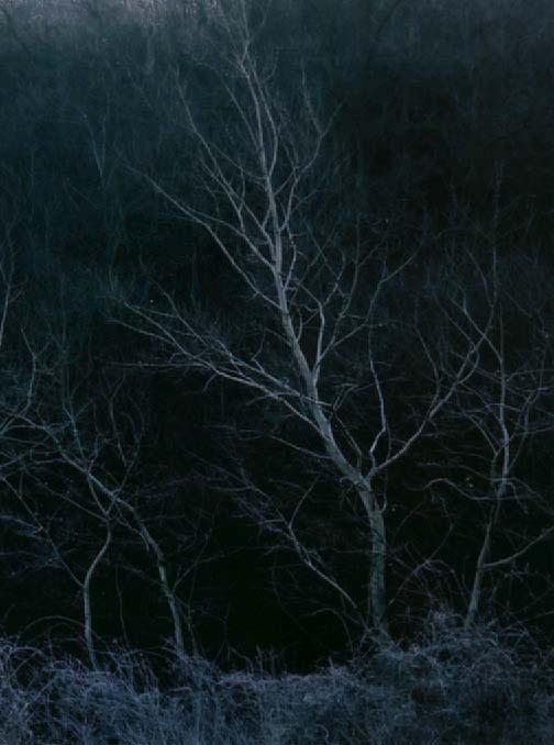 "фото ""Wood of the dreams"" метки: пейзаж, природа, лес, цветы"