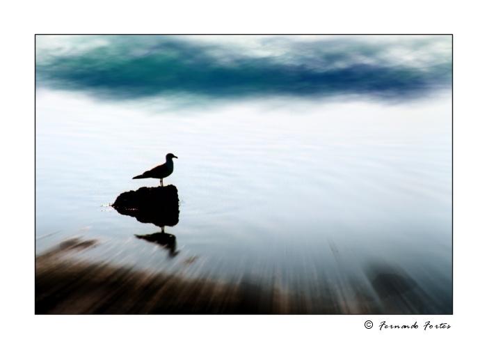 """фото """"The Sentinel"""" метки: природа, дикие животные"""