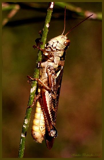 """фото """"Just Hanging Around"""" метки: макро и крупный план, природа, насекомое"""