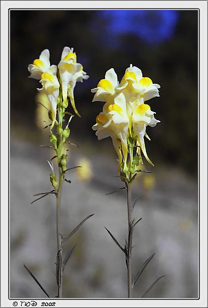 """фото """"Ностальгическая"""" метки: природа, цветы"""