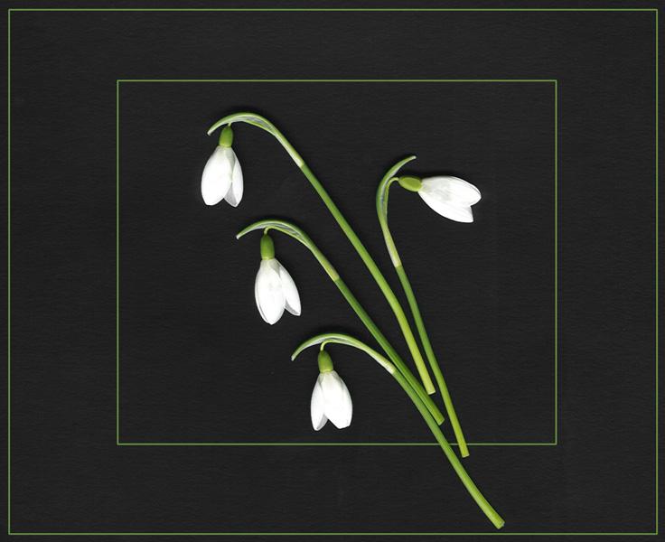 "фото ""Spring is here"" метки: природа, цветы"