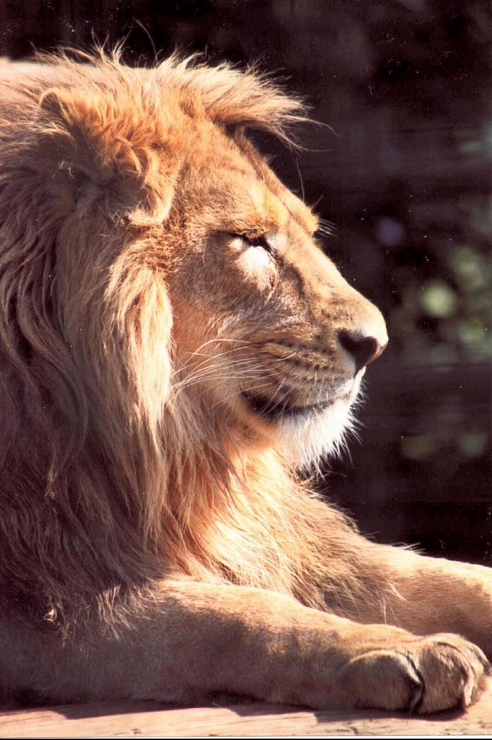 """фото """"LooKING forward"""" метки: природа, разное, дикие животные"""