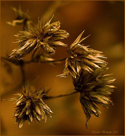 """фото """"Rush #2"""" метки: макро и крупный план, природа, цветы"""