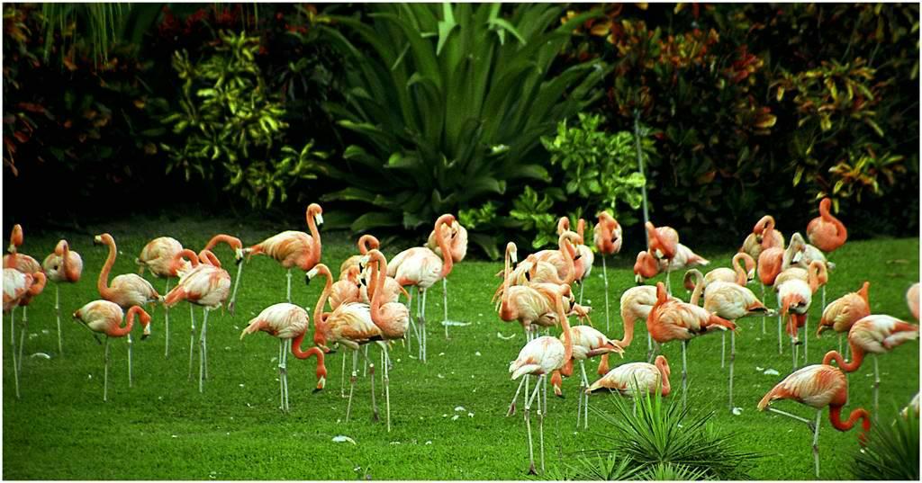 """фото """"Розовая поляна. Florida"""" метки: природа, дикие животные"""