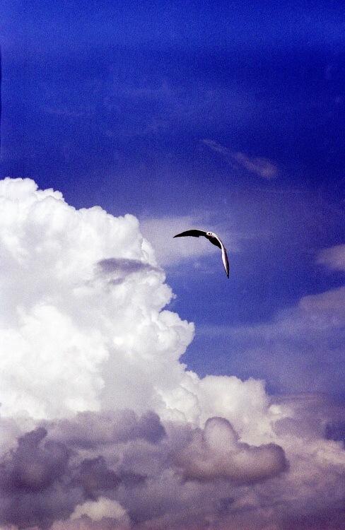 """фото """"ЗЕМНОЕ ПРИТЯЖЕНИЕ"""" метки: природа, пейзаж, дикие животные, облака"""