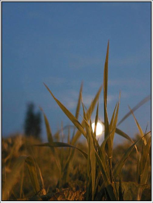 "фото ""Перед рассветом"" метки: пейзаж, лето"