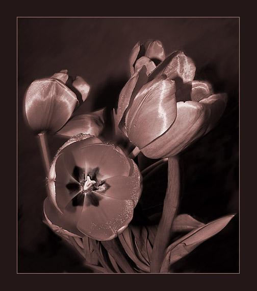 "фото ""still life - 36"" метки: натюрморт, природа, цветы"