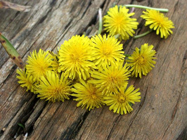 """фото """"Bouquet For Mommy"""" метки: природа, макро и крупный план, цветы"""