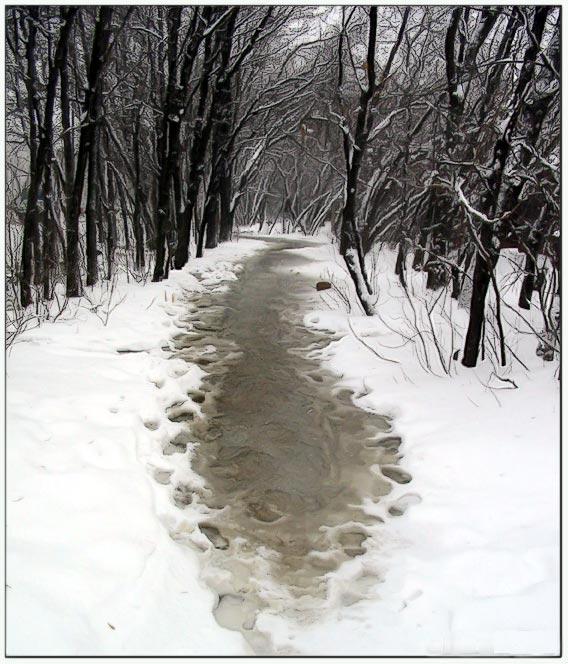 """фото """"Опять пришла зима"""" метки: пейзаж, зима, лес"""