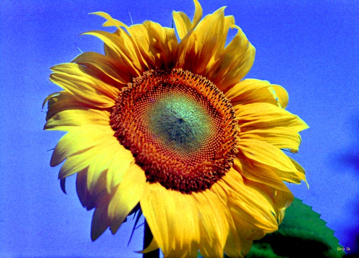 "фото ""The Young"" метки: природа, цветы"