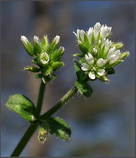 """фото """"Spring Begins"""" метки: макро и крупный план, природа, цветы"""