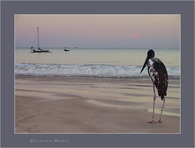 """фото """"Сто лет одиночества..."""" метки: природа, жанр, дикие животные"""