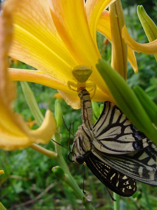 "фото ""Prey II"" метки: природа, насекомое"