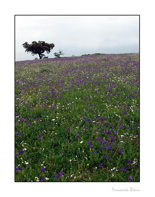 """фото """"Spring"""" метки: пейзаж, весна"""