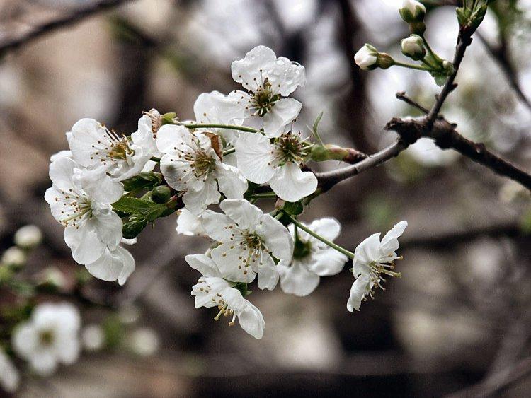 "фото ""The spring"" метки: природа, цветы"