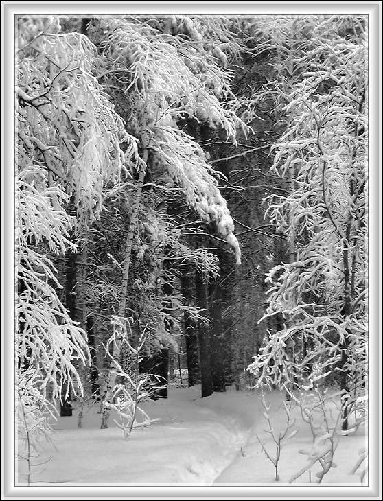 "фото ""И это- конец марта! #1"" метки: пейзаж, весна, зима"