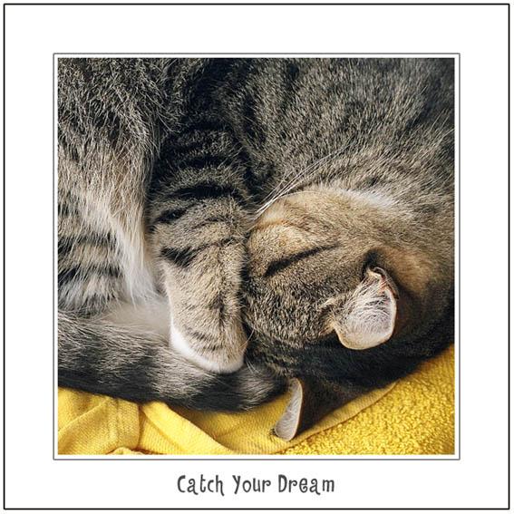 "фото ""Catch Your Dream"" метки: природа, домашние животные"
