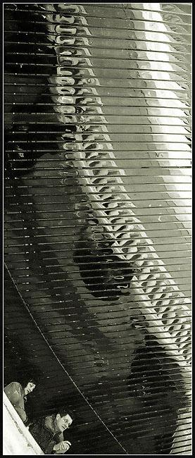 """фото """"balustrade (провинциалы в Москве)"""" метки: черно-белые, разное,"""