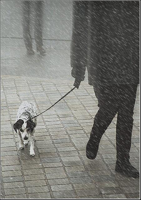 "фото ""The Parisian walk"" метки: разное,"