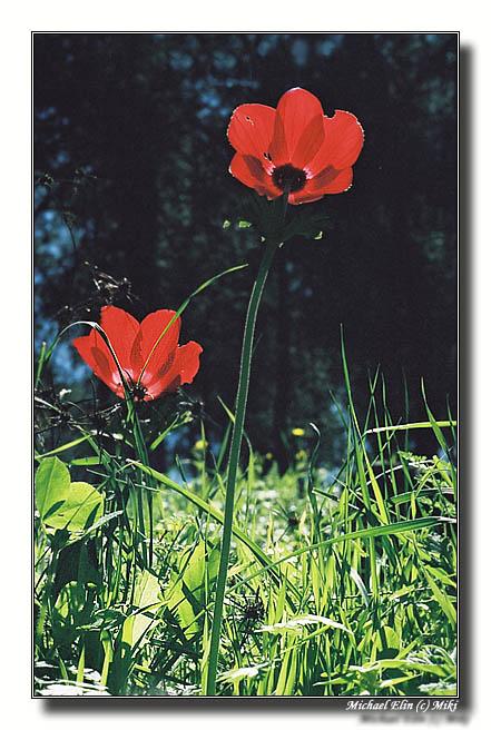 """фото """"К Солнцу! (Весенняя 3)"""" метки: природа, цветы"""
